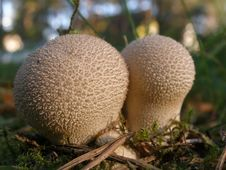 Free Macro Mushrooms Stock Photo - 1282470