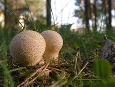 Free Tiny Mushrooms Stock Image - 1282471
