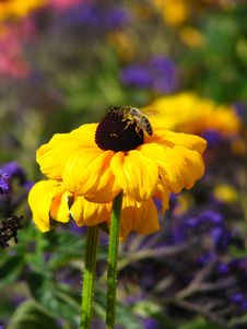 Free Bee Sitting Over Yellow Flower Stock Photo - 1283170
