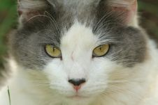 Cat S Eyes Royalty Free Stock Photos