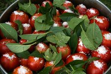 Free Tomatoes With Currant Leaves And Salt In Big Pan1 Stock Photo - 1284460