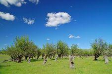Rural Spring Countryside Stock Photos