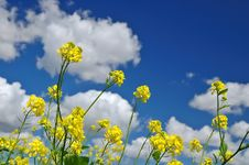 Free Rural Spring Meadow Stock Images - 1284494