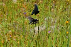 Free Butterflies In A Meadow Stock Photo - 1284510