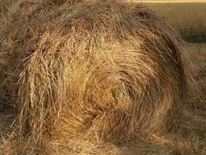 Free Harvested Roll Of Straw One Royalty Free Stock Photos - 1284638