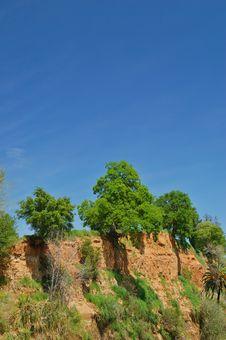 Free Oak Trees On Cliff Stock Photos - 1284733