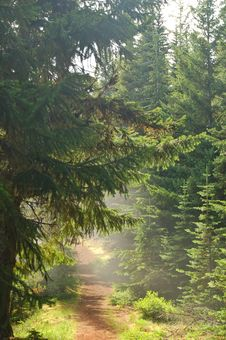 Pacific Northwest Forest Stock Images
