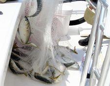 Free Fresh Catch Stock Photos - 1285693