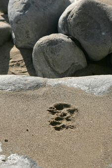 Free Footprint On Wet Sand On Rock Royalty Free Stock Photo - 1286305