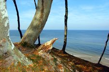 Free Forest Coast Stock Photography - 1286372
