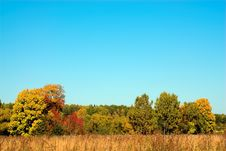 Free Golden Autumn Stock Photography - 1286672