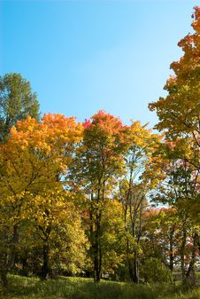 Free Golden Autumn Royalty Free Stock Image - 1286696