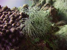 Free Sea Flower(worm) Stock Photos - 1288583