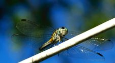 Free Dragonfly Stock Photo - 1289040