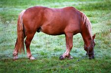 Free Feeding Horse - Grain Visible Royalty Free Stock Photos - 1289938