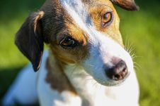 Free Adorable, Animal, Canine Stock Photography - 128018522