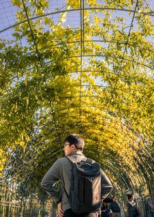 Free Man Walking On Leafed Tunnel Stock Image - 128037231