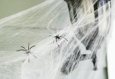 Free Two Spiders On Web Royalty Free Stock Image - 128037246