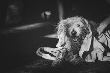 Free Grayscale Photography Of Dog Yawning Stock Image - 128037341