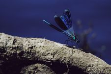 Free Selective Focus Photography Of Blue Damselfly Perched On Brown Tree Branch Stock Photo - 128037460