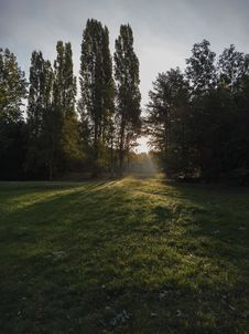 Free Green Leafed Trees And Green Grass Field Royalty Free Stock Images - 128037519