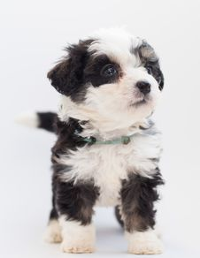 Free Close-Up Photo Of Furry Puppy Stock Photo - 128037560