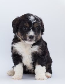 Free Close-Up Photo Of Furry Puppy Royalty Free Stock Photo - 128037575