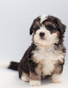 Free Close-Up Photo Of Sitting Puppy Stock Photo - 128037600