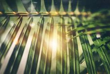 Free Selective Focus Photography Of Green Palm Tree Leaves Stock Photo - 128037690