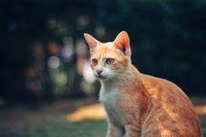 Free Photography Of Orange Tabby Cat Stock Photography - 128194592