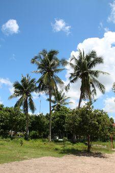 Free Sky, Tree, Vegetation, Palm Tree Royalty Free Stock Images - 128257079