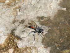 Free Insect, Invertebrate, Fauna, Arthropod Stock Photos - 128257243