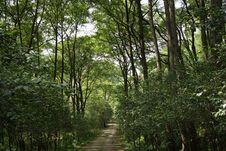 Free Ecosystem, Woodland, Vegetation, Nature Stock Photos - 128257643