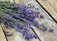 Free Lavender, Flower, English Lavender, Purple Stock Photo - 128257660