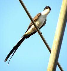 Free Bird, Beak, Fauna, Sky Stock Images - 128257934