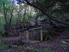 Free Woodland, Nature, Tree, Vegetation Royalty Free Stock Photography - 128357107