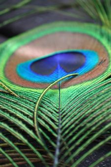 Free Close-up Photo Of Green And Brown Peacock Feather Stock Image - 128399991