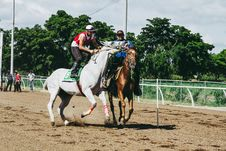 Free Two White And Brown Running Horses Royalty Free Stock Photos - 128405068