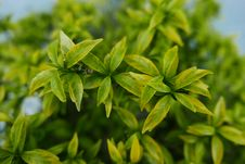 Free Selective Focus Photography Of Green Leafs Royalty Free Stock Photo - 128405155