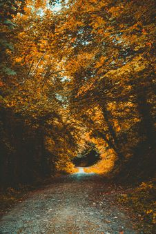 Free Empty Pathway Between Brown Leafed Trees Royalty Free Stock Image - 128405286
