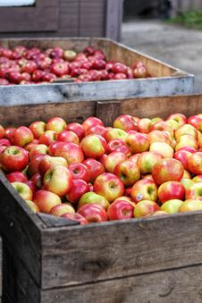 Free Red Apple Lot In Wooden Crates Royalty Free Stock Images - 128405399