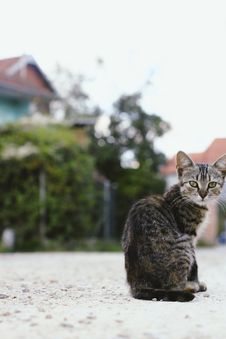 Free Shallow Focus Photography Of Cat Sitting On Ground Stock Photography - 128405472