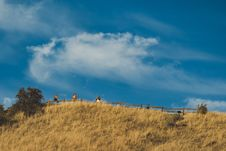 Free Four People Standing On Top Of The Hill With Fence Stock Photos - 128405483
