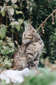 Free Shallow Focus Photography Of Brown Tabby Kitten Royalty Free Stock Photography - 128405547