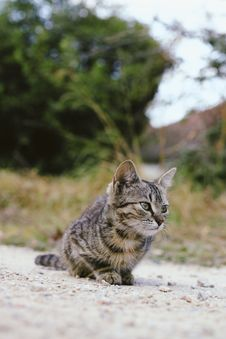 Free Brown Tabby Cat On Gray Surface Royalty Free Stock Photography - 128405567