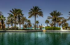 Free Green Palm Trees Under Clear Blue Sky Royalty Free Stock Photos - 128405588