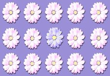Free Flower, Flowering Plant, Purple, Daisy Royalty Free Stock Photos - 128440068