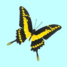 Free Machaon Butterfly 2 Stock Photos - 12855693