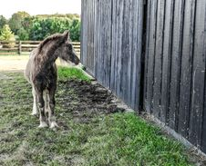 Free Gray And White Foal Standing Beside Wood Fence Royalty Free Stock Photos - 128558028