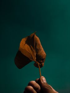 Free Person Holding Brown Leaf Royalty Free Stock Photo - 128558085